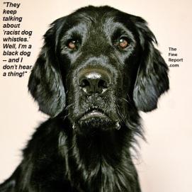 Puzzled-black-dog2